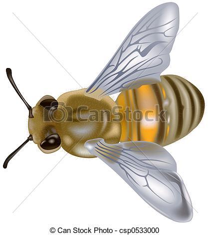 Stock Illustration of Honeybee (Apis mellifera) csp0533000.