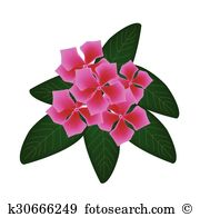 Apocynaceae Clip Art Illustrations. 12 apocynaceae clipart EPS.