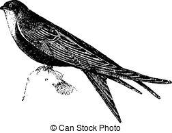 Apodiformes Vector Clipart EPS Images. 1 Apodiformes clip art.