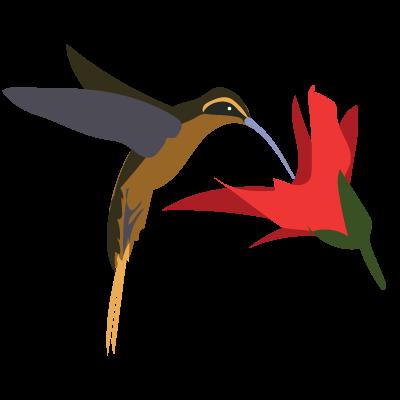 Its Hummingbird Week on iNaturalist! Feb 28.