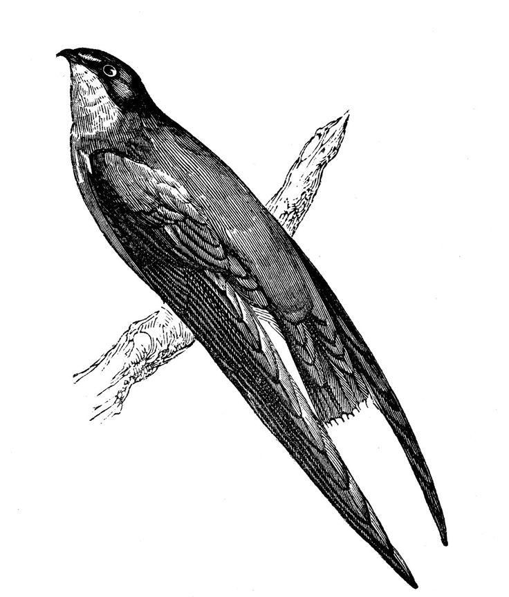 1000+ ideas about Vintage Birds on Pinterest.