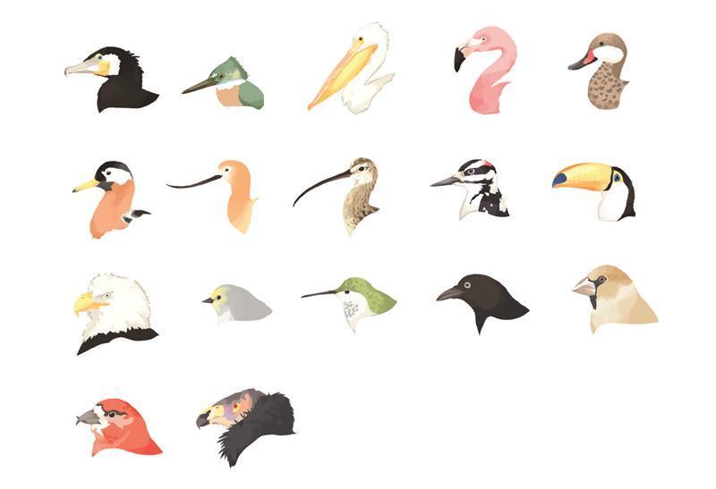 Ornithology by jes lowery.