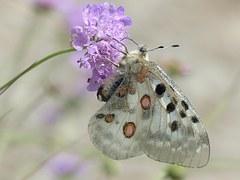 Free illustration: Butterfly, Purple, Green, Clipart.
