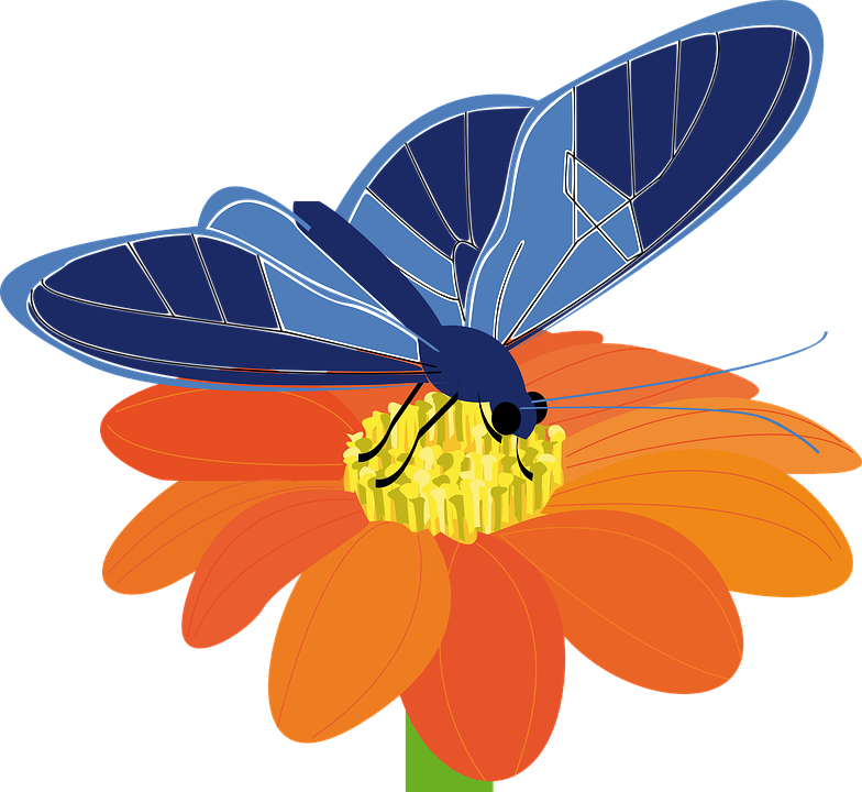 Free vector graphic: Butterfly, Flower, Insect, Plant.
