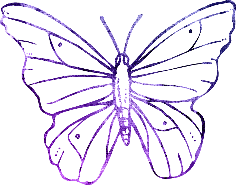 Free illustration: Butterfly, Purple, Outline, Clipart.
