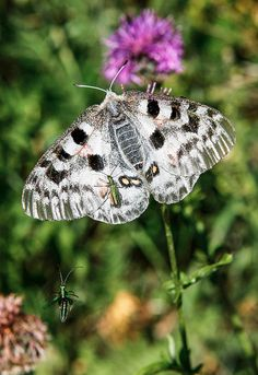 Amazon.com: National Geographic Readers: Flutter, Butterfly.