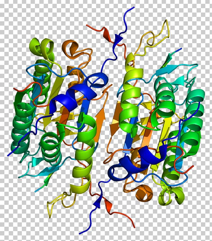 Caspase 2 Protein Caspase 1 Proteolysis PNG, Clipart.