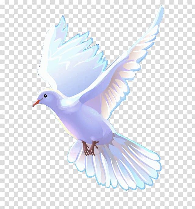White dove art, Bible Christian Church Christianity.