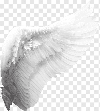 Wing cutout PNG & clipart images.