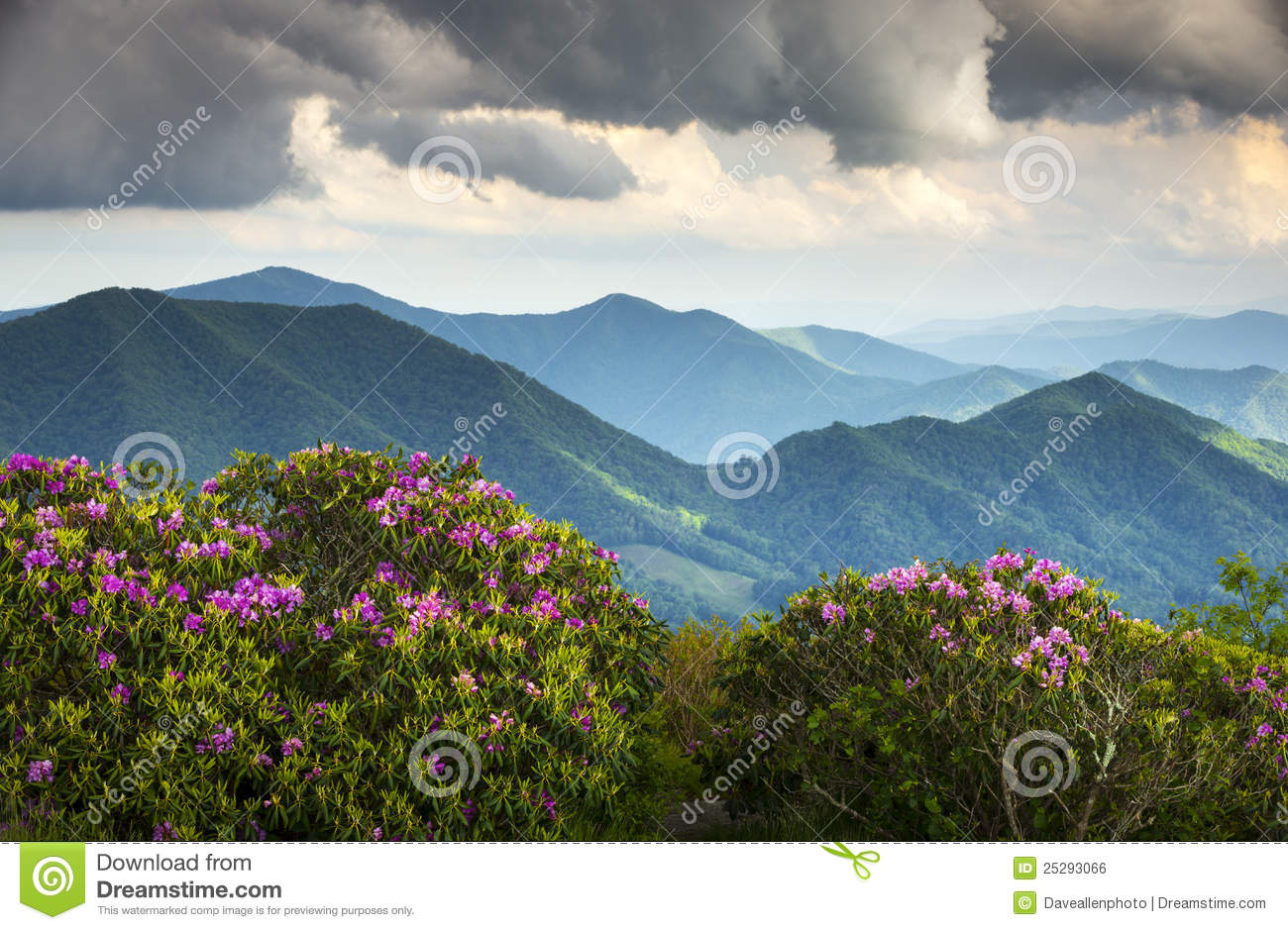 Blue Ridge Appalachian Mountains Spring Flowers Royalty Free Stock.
