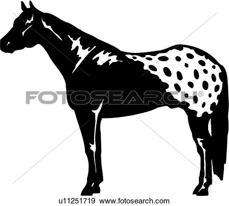 Clip Art of , animal, appaloosa, breed, horse, standing, u11251719.
