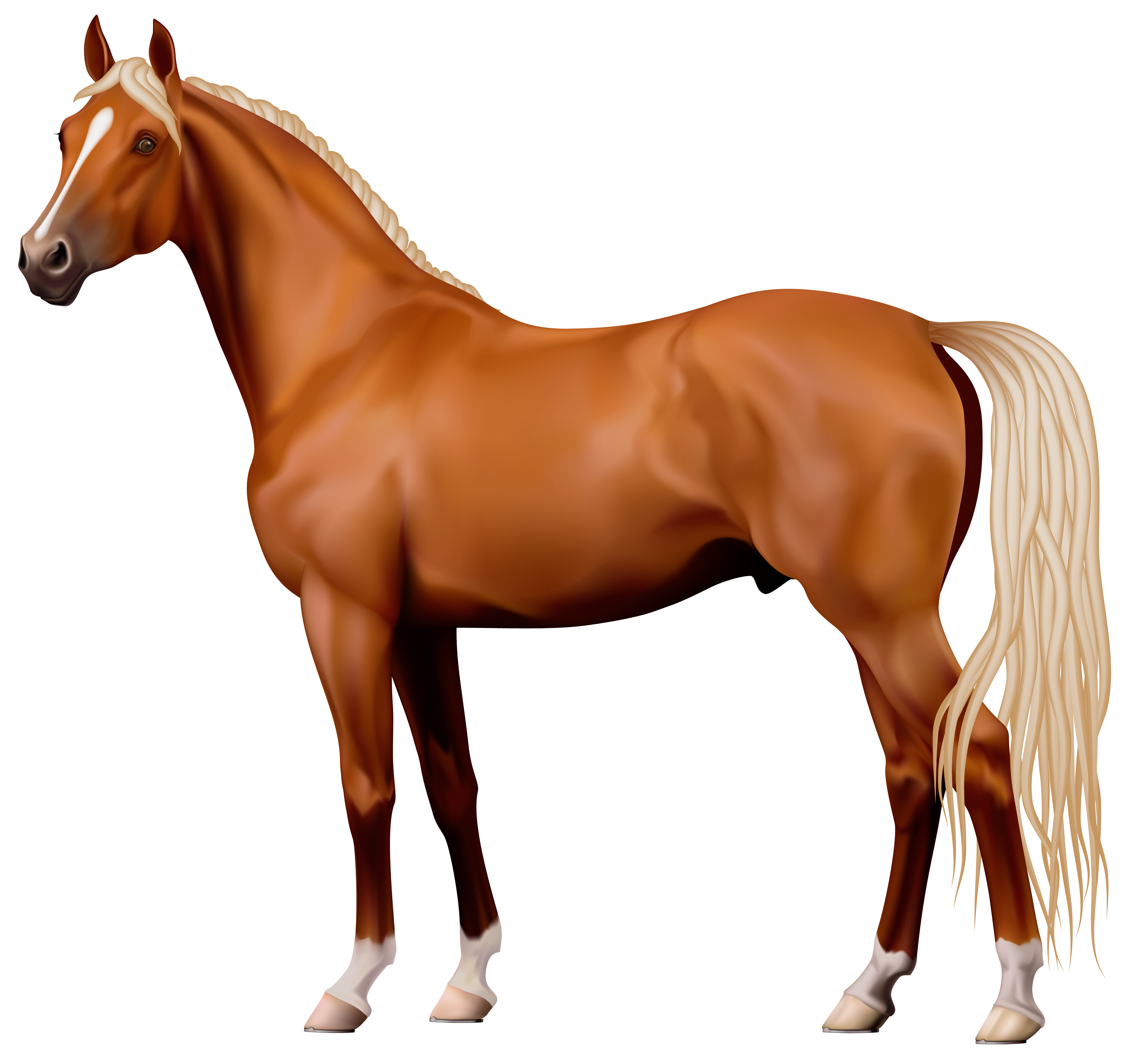 The best free Appaloosa clipart images. Download from 4 free.