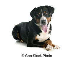 Appenzell mountain dog clipart.