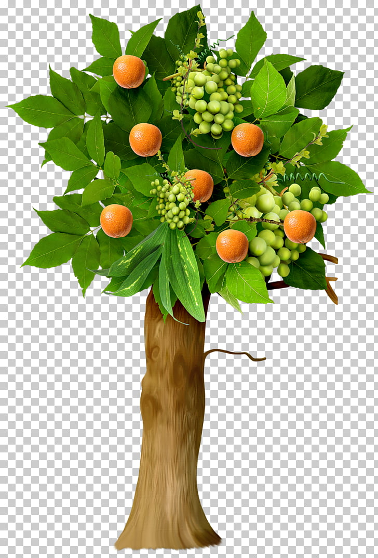 Fruit tree Apple, orange tree PNG clipart.