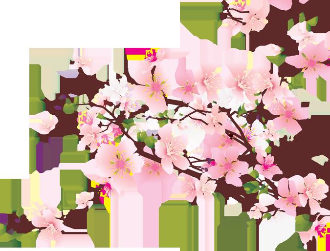 cherry blossom clip art.