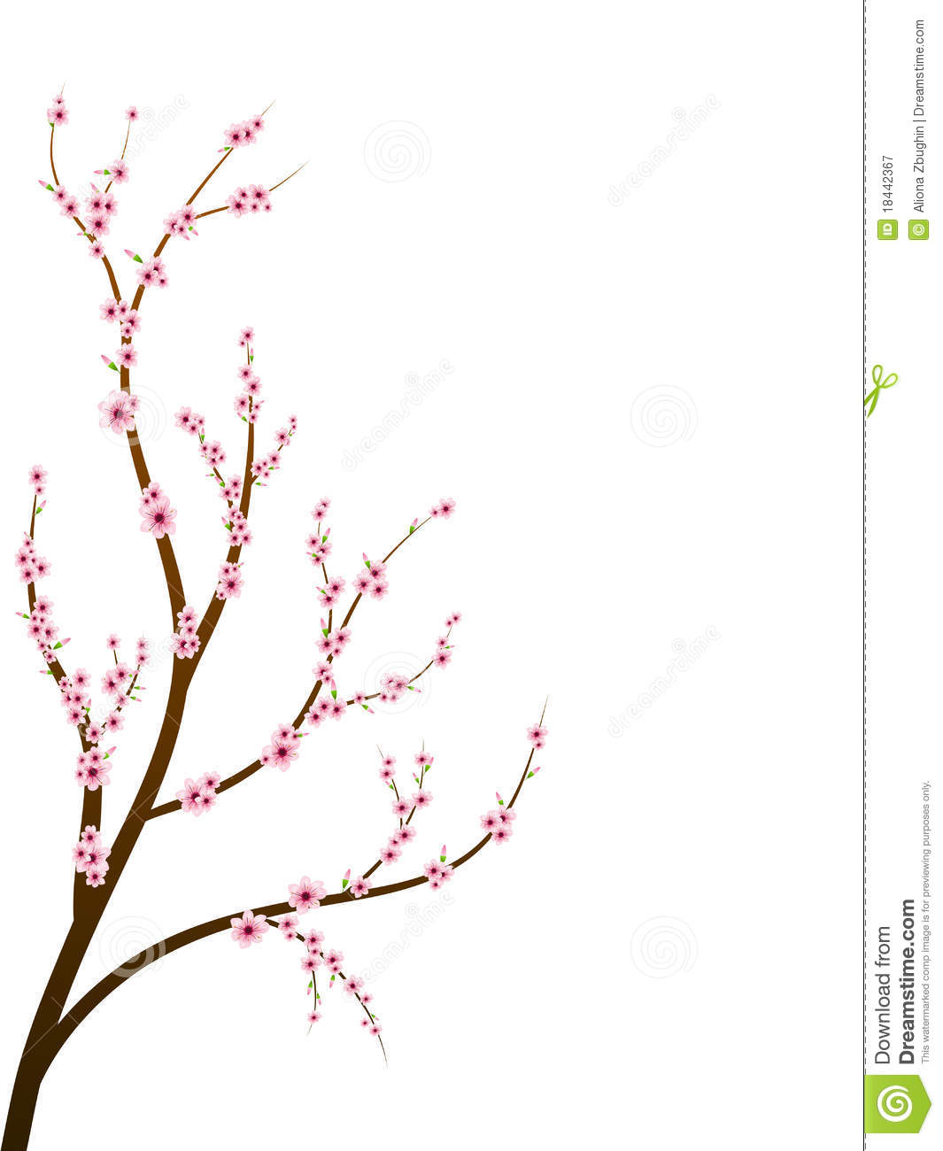 Cherry Blossom Branch Royalty Free Stock Photography.