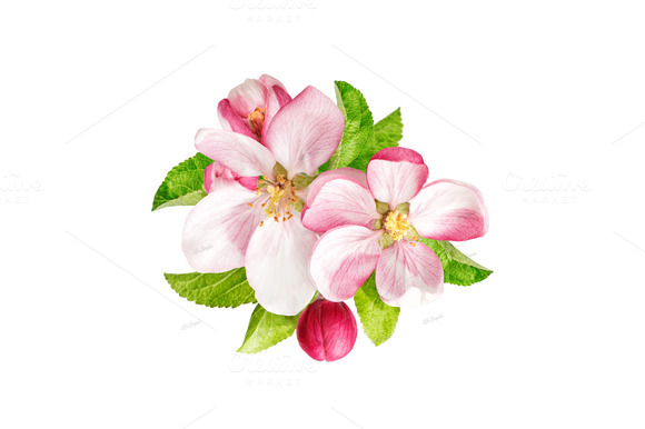 Apple Blossom Clip Art.