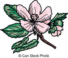 Apple blossom Stock Illustrations. 1,642 Apple blossom clip art.