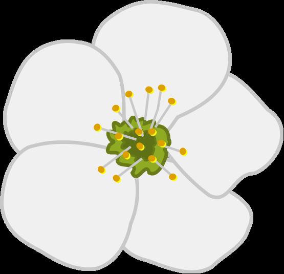 Blossom clip art.