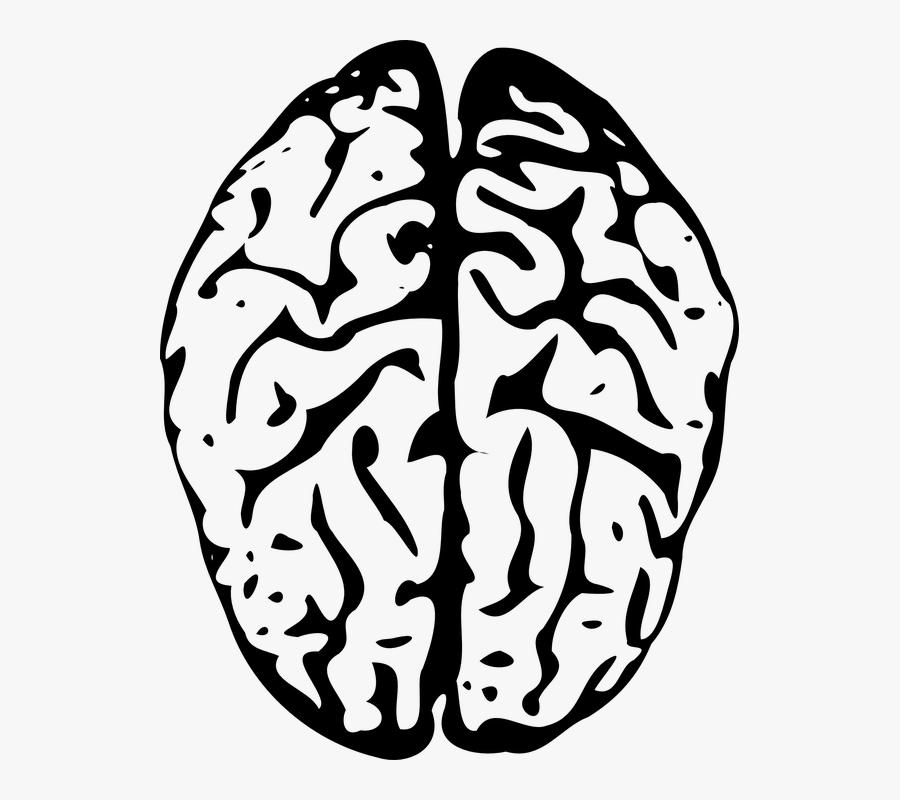 Transparent Background Brain Clip Art.