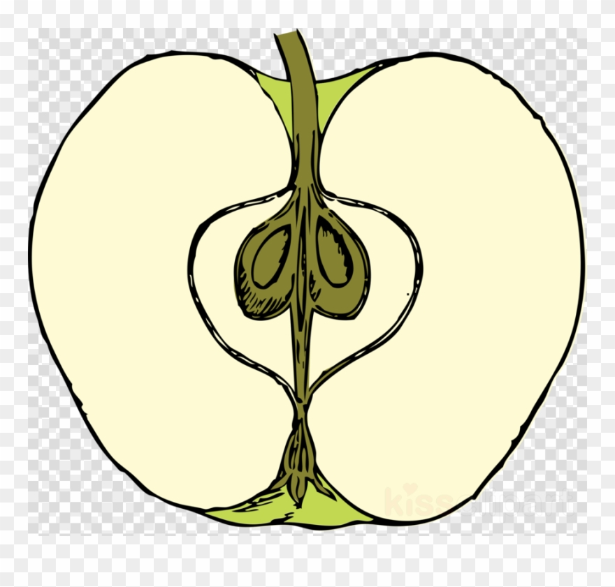 Apple Cut In Half Clipart Clip Art.