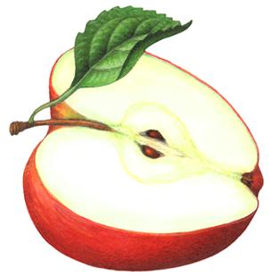 Free Cut Apple Cliparts, Download Free Clip Art, Free Clip.