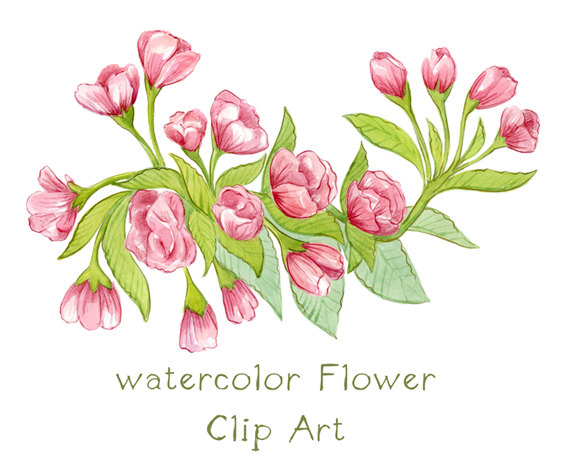 Digital Clipart Watercolor Apple Blossom Flower by SwiejkoForPrint.