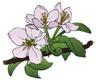 Apple Flower Clip Art Yellow Stock Illustration.