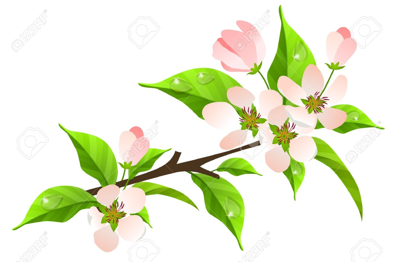 Apple tree flowers clipart.