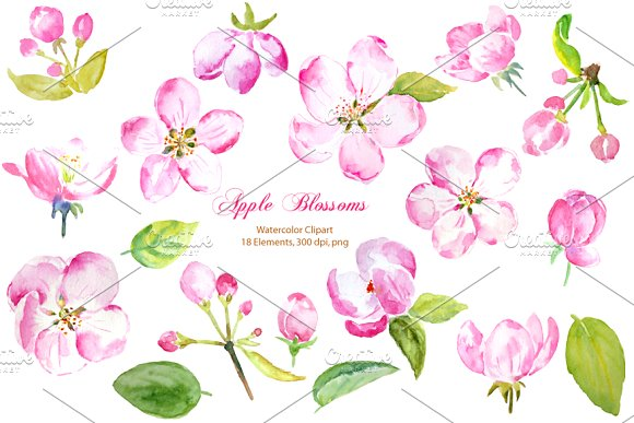 Watercolor Apple Blossoms Pink ~ Illustrations on Creative Market.
