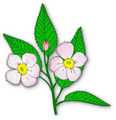 Free Animated Flower Gifs.