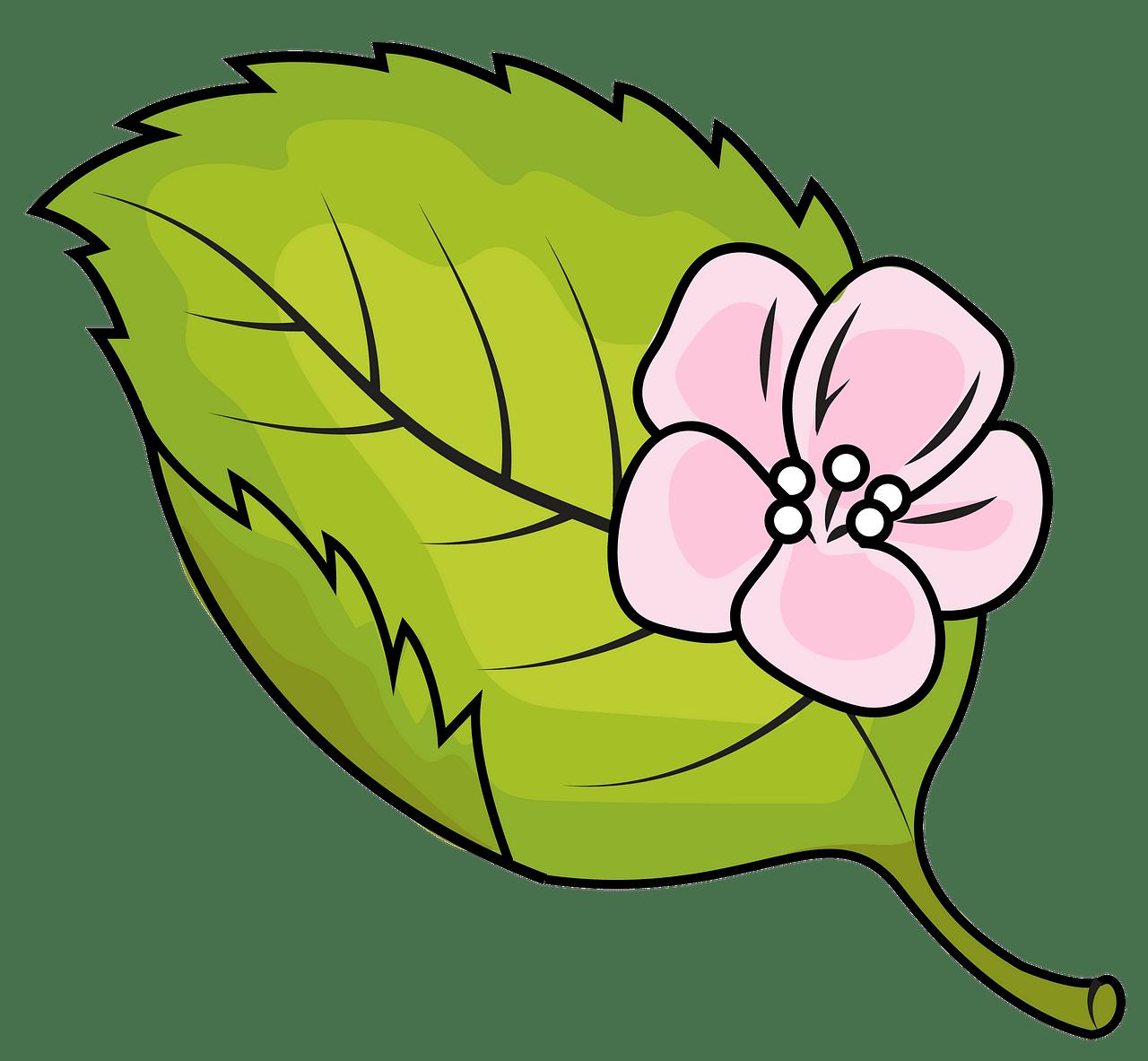 Apple leaf clipart. Free download..