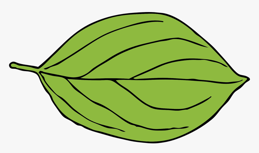 Apple, Leaf, Green, Oval, Shape.