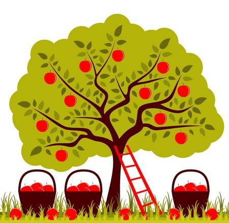 Apple orchard clipart 6 » Clipart Station.