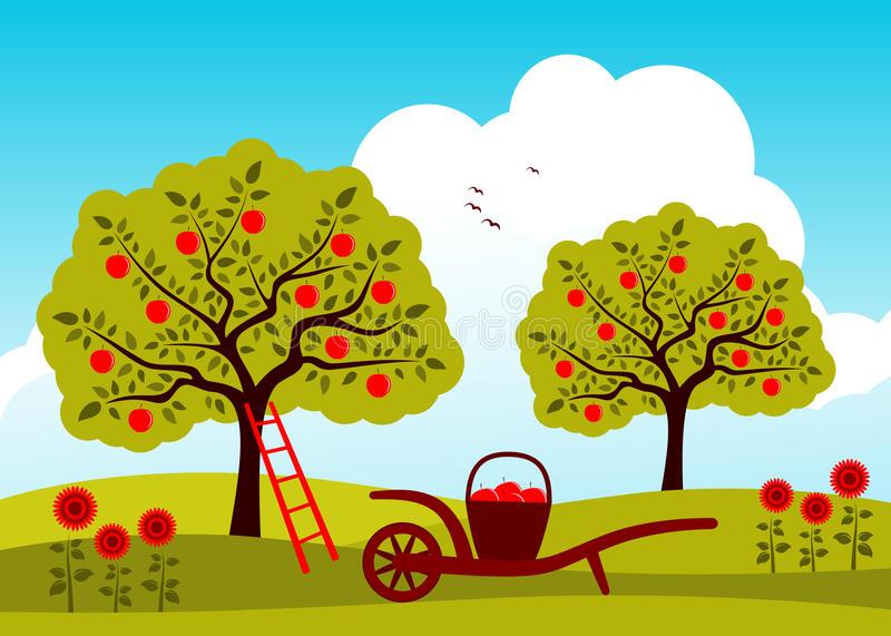 Apple Orchard Stock Illustrations.