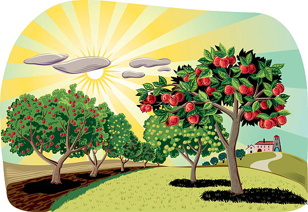 Best Apple Orchard Illustrations, Royalty.