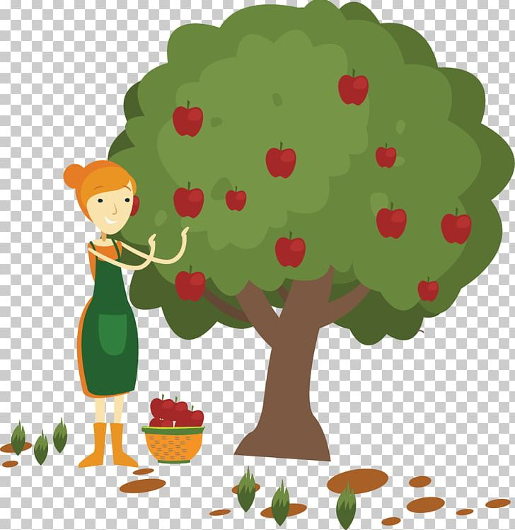 Apple Fruit Picking PNG, Clipart, Apple Fruit, Apple Lo, Branch.
