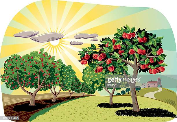 60 Top Orchard Stock Illustrations, Clip art, Cartoons, & Icons.