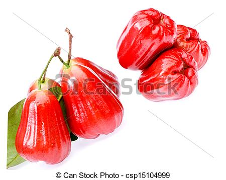 Stock Photographs of Rose apple fruit on white background.