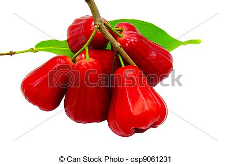 Stock Photography of Thai fruit Rose apple isolated in white.