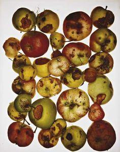 29 Best rotten fruit images.