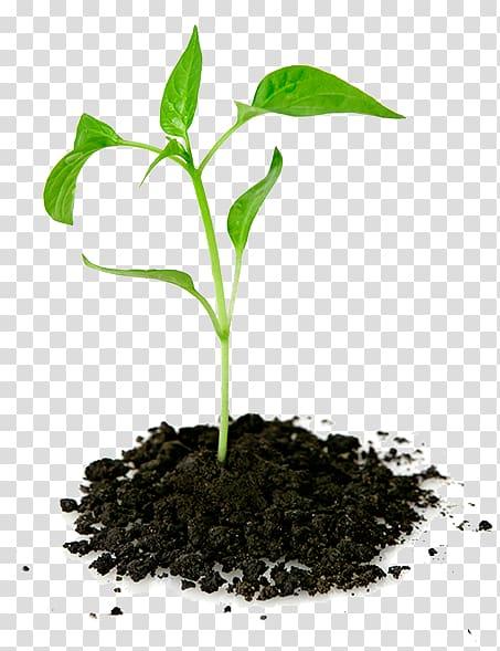 Green leaf plant , Plant Seedling Pletivo, Tree plantation.