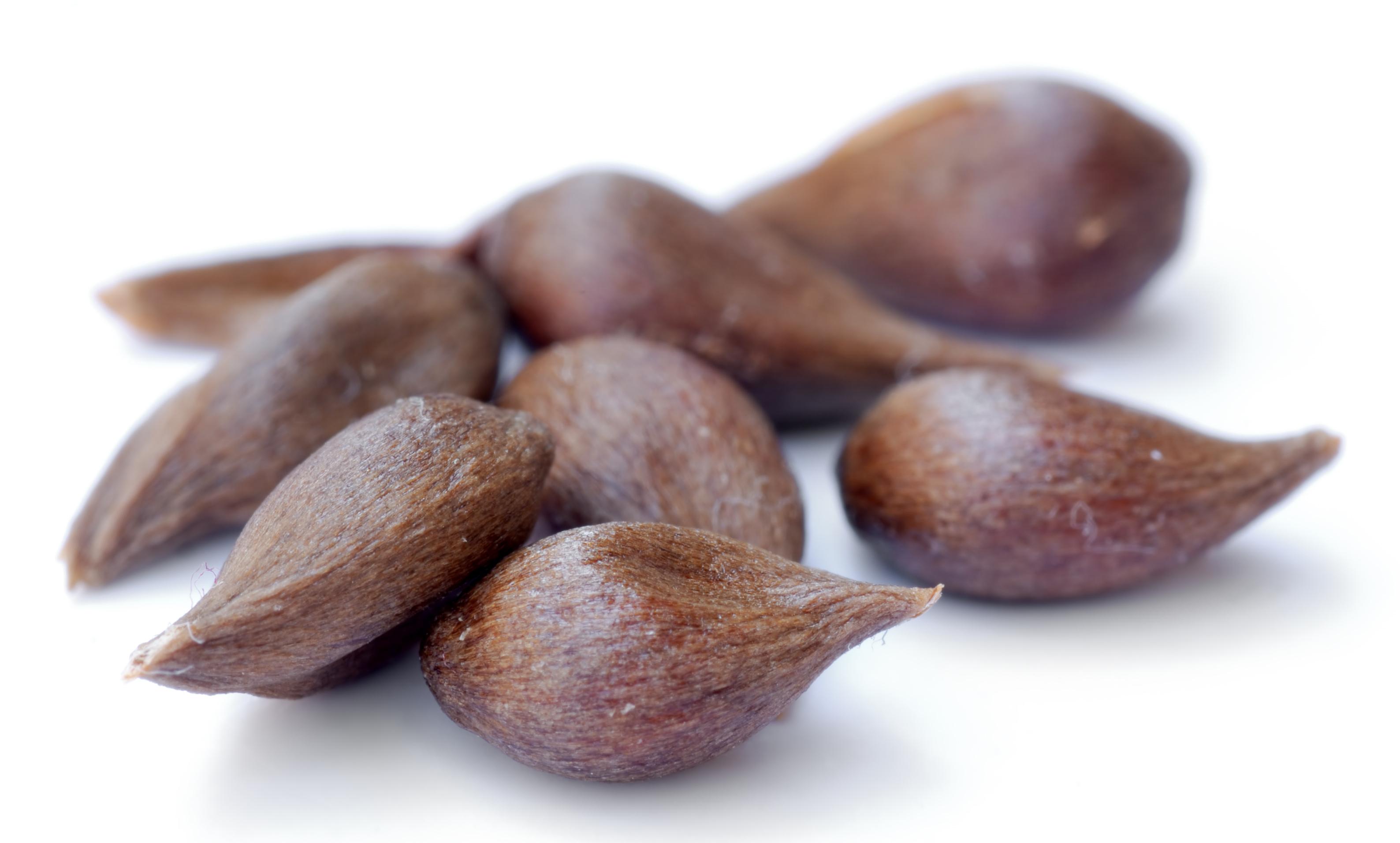 File:Apple seeds.