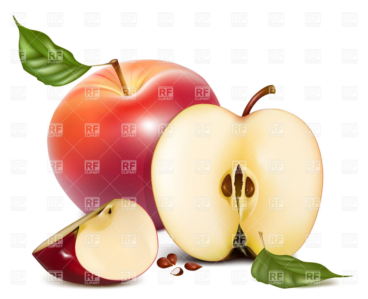 Apple half and slice Stock Vector Image.
