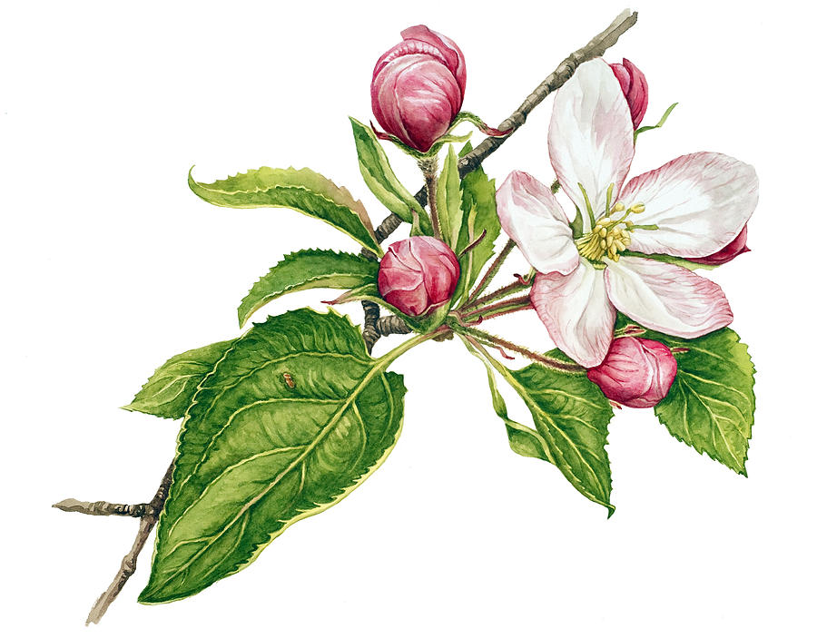 Apple Tree Paintings.