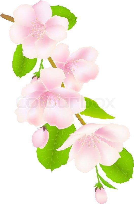 Apple Tree Flowers.