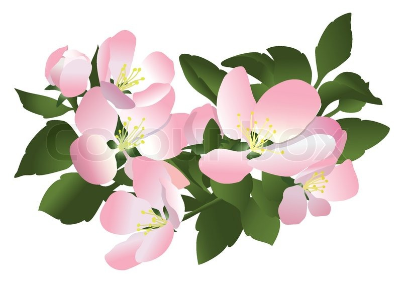 Flowers of apple tree.