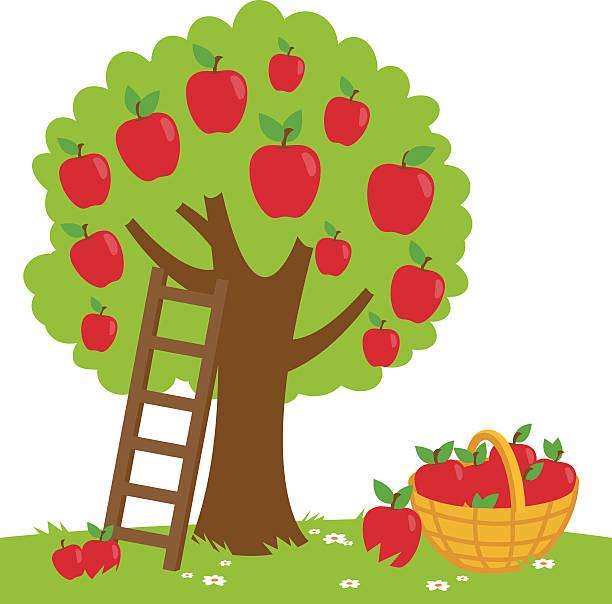 Best Apple Tree Illustrations, Royalty.