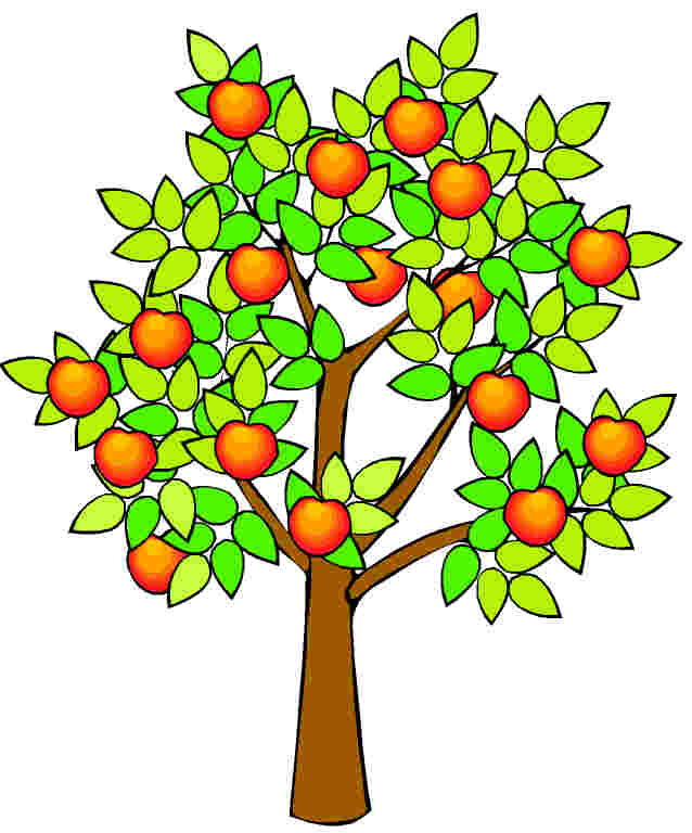 Apple Tree Drawing.