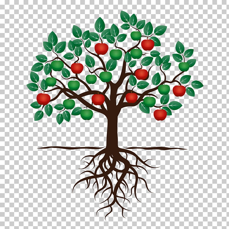 Fruit tree Drawing Apple Root, tree PNG clipart.